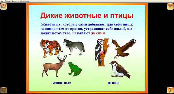 """Иллюстрация """"Дикие животные и птицы"""""""